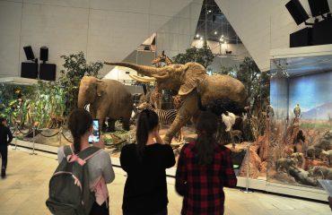 В феврале обучающиеся 5-6 классов посетили   с экскурсией Дарвиновский Музей 5
