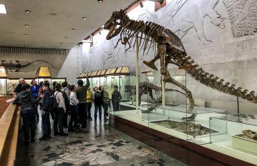 Палеонтологический музей им. Ю.А.Орлова 10