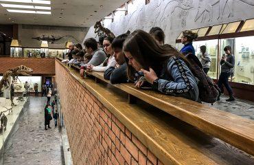 Палеонтологический музей им. Ю.А.Орлова 11